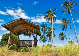 Coconut farm in the Philippines. Photo: hoseal
